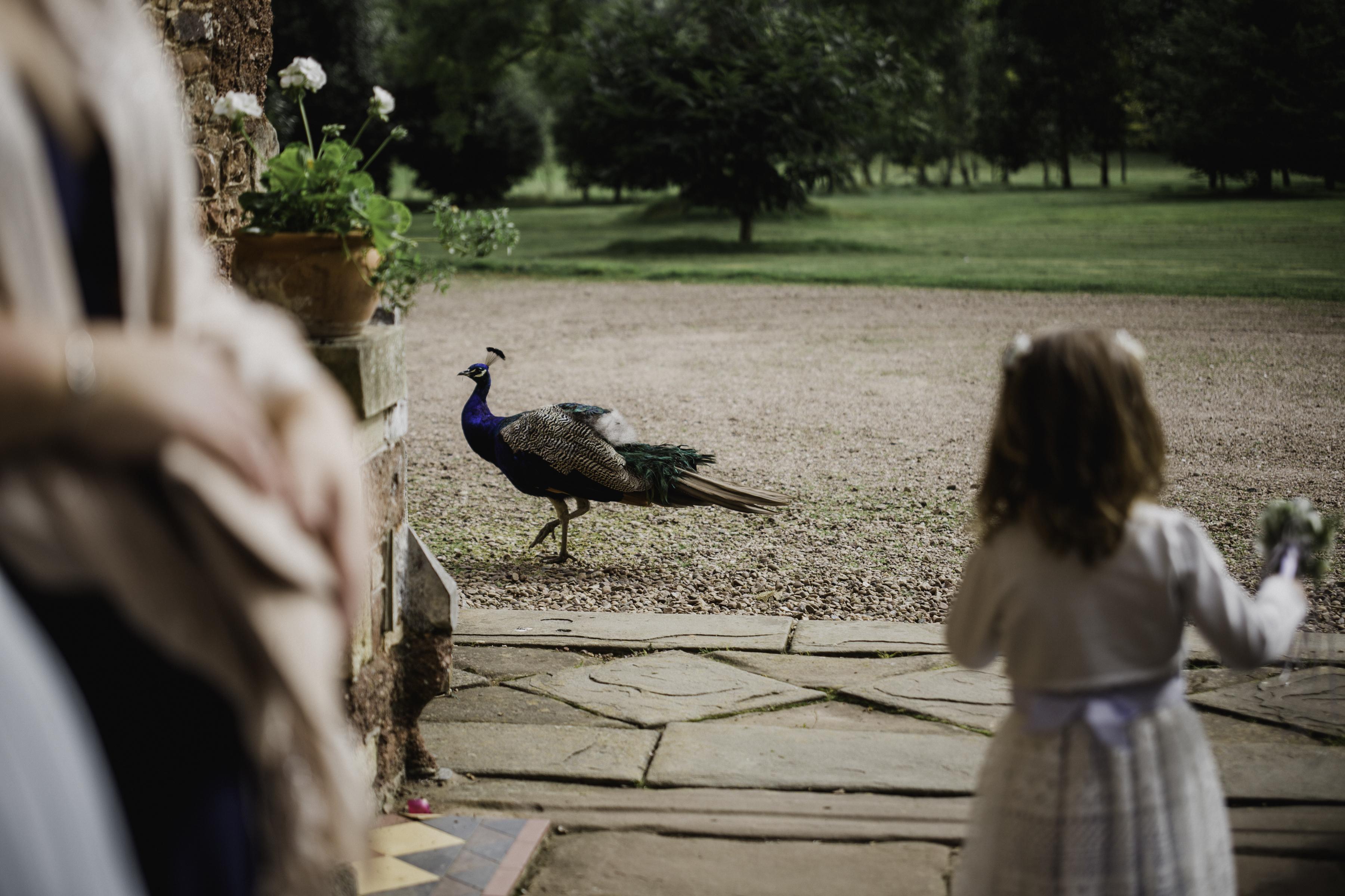 Polly and Ben Wedding
